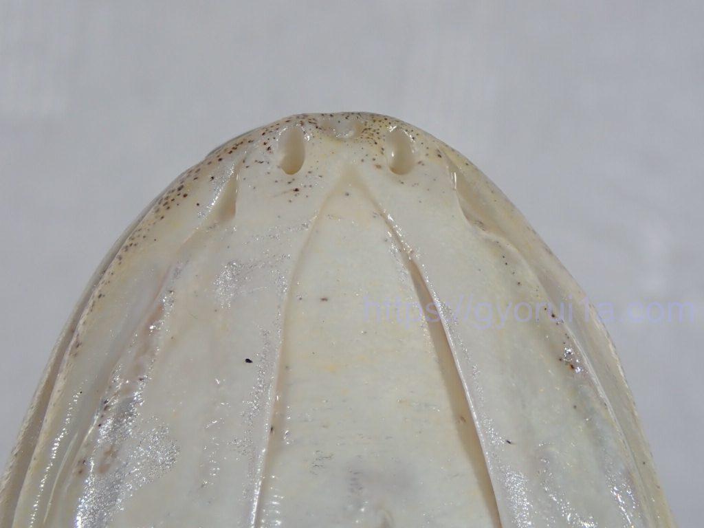 ニベ 下顎